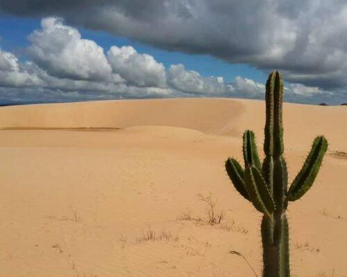 Cactus in Lomas de Arena