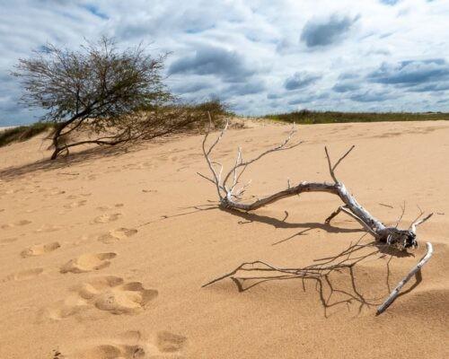 Lomas de Arena desert