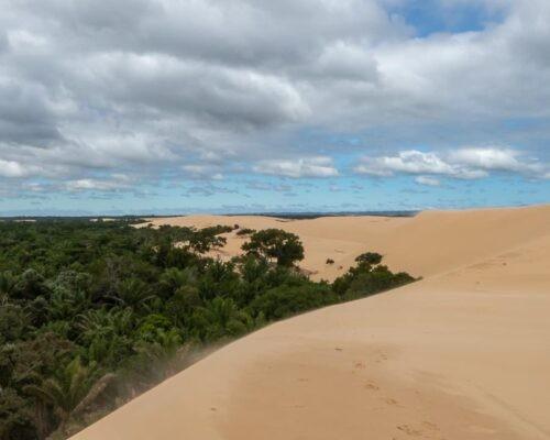 Jungle meets desert