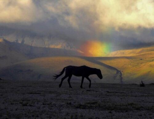 Horse in Cotopaxi National Park