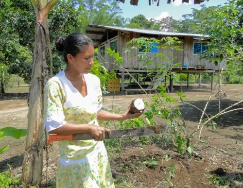 Woman with yuca in jungle