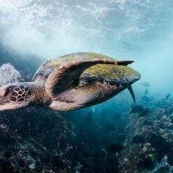 Diving & Hiking in Galapagos | 1 Week | from QUITO, ECUADOR