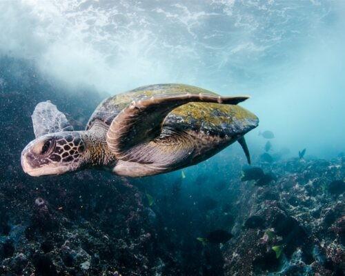 Diving & Hiking in Galapagos   1 Week   from QUITO, ECUADOR