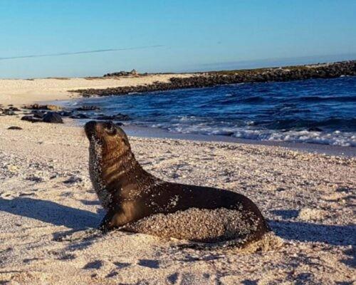 Sea lion pup on Galapagos Islands, Ecuador