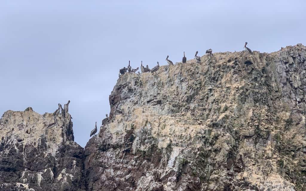 Birds atop an ocean cliff.