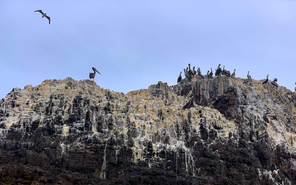 Birds on rock covered in bird poop.