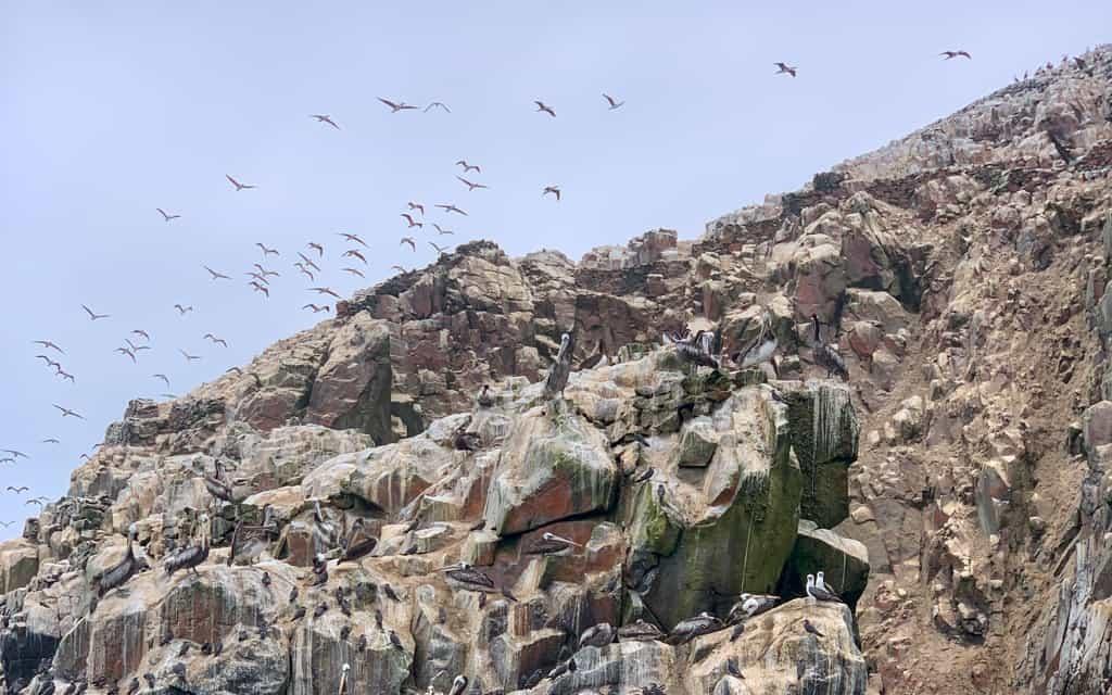 Birds flying around cliffs at sea.