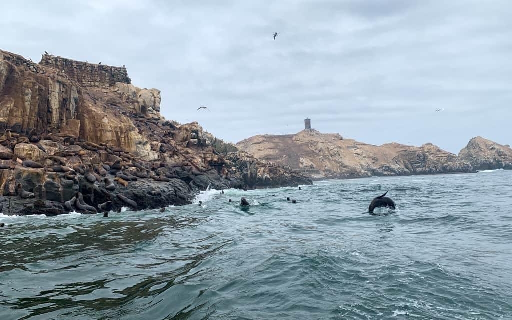 Sea lions swimming in sea near cliffs.