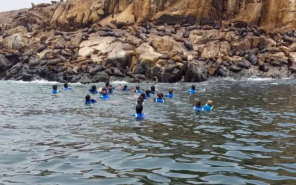 People swimming with sea lions in sea.