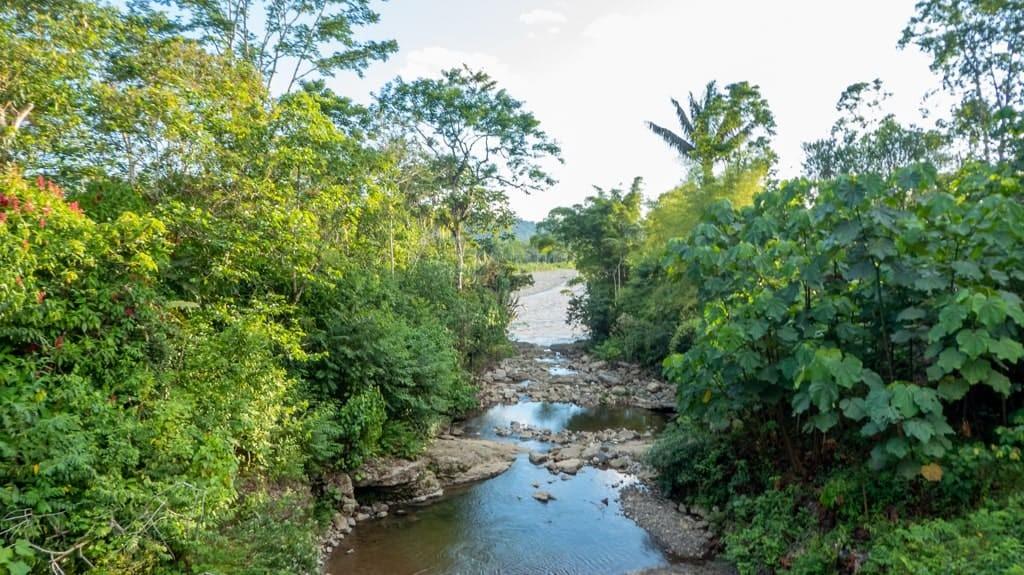 River running through jungle