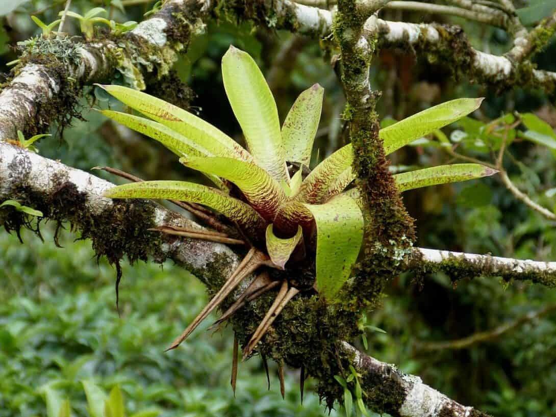 Plant in cloud forest